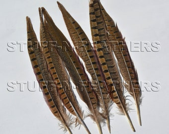 RINGNECK pheasant tail feathers, long natural brown loose feathers for millinery, crafts / 9-12 in (22.8-30.5cm) long, 6 pieces / F151-9
