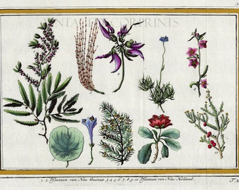 18th Century Botanical Engraving of Plants of New Guinea by J.Y.Schley Circa 1760. Handcolored in Watercolor Decorative Tropical Plant Print