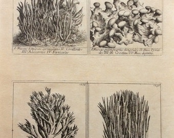 Rare Antique 18th Century Engraving CORAL SEA WEED Sea Life Print