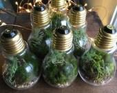 Bundle Bright Idea Terrarium HOLIDAY DEAL 5 for 75