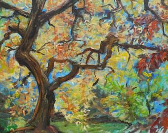 Nashville Tree - Found in Percy Warner Park
