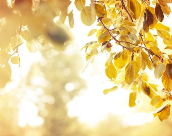 Golden Sunlight Photography - Fine Art Photography, Yellow Foliage, Fall Autumn Leaves, Wall Art, Abstract, Dreamy