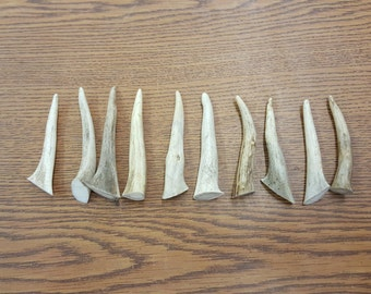 "Lot of 10 Deer Antler Tines  3"" to 3 1/2"" Long TINEX4"