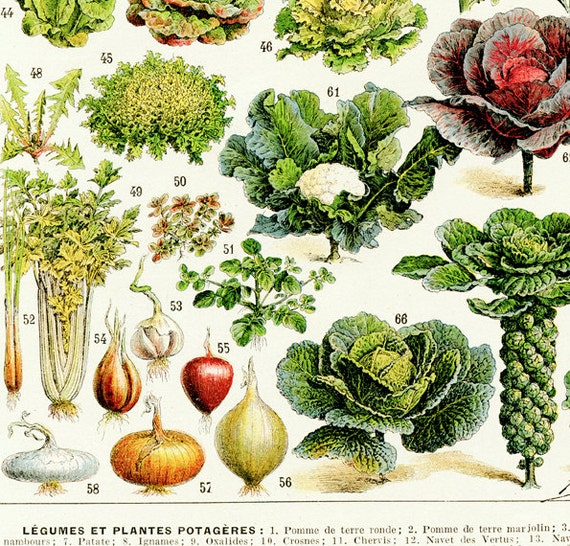 Large Printable Vegetable Poster 1936 Vintage Kitchen