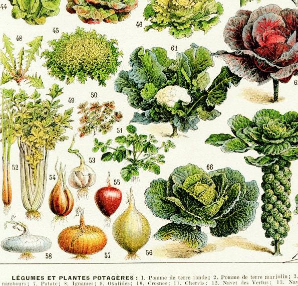 Kitchen Decor Vegetables: 1936 Vintage Kitchen Decor Vegetable Poster By