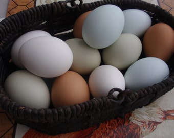 One Dozen Clean and Blown Eggs, Chicken (6) and Duck Eggs (6) in White, Brown, Green and Blue