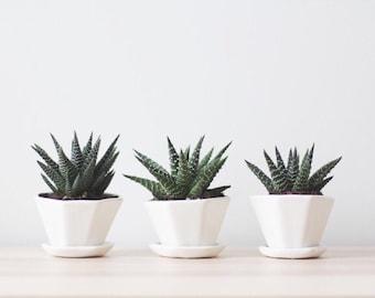 Set Savings! (20-30% Off)  - Mini Octagon Planter Sets