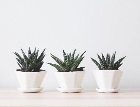 Mini Octagon Planters by Convivial Production, $18 each or $45.90 for a set of 3 (plus shipping).