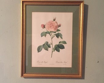 "Vintage Framed Large Pierre-Joseph Redoute ""Rosa Alba Regalis"" ""La Rosier Blanc Royal"" Botanical Print 14""x10.5"" circa 1940s-1950s"