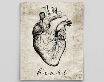 Heart Print Vintage Heart Poster Human Anatomy Poster Anatomy Art Anatomy Print Graduation Gifts for Doctors Science Art Science Poster
