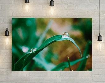 Dewy Grass Canvas Art, wall art canvas, canvas print, nature art, nature photography, nature prints
