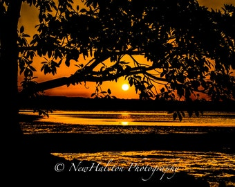 Sunset over the bay Print, Orange sunset through silhouette of tree Fine Art photograph,  8 by 10