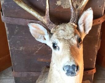 Oh Deer!!!!
