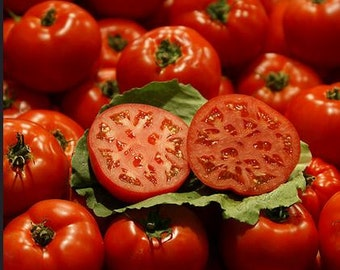 Oregon Spring Tomato, early heirloom 15+ seeds