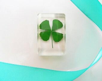 Real Irish Four Leaf Clover in Plexiglass