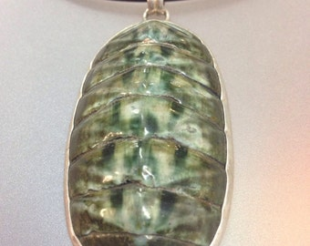 Large Chiton fossil set in Sterling Silver