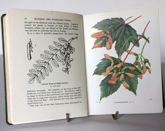 Illustrated Wayside And Woodland Tree Guide Vintage, Rare 1940s Attractive colour illustration nature Guide