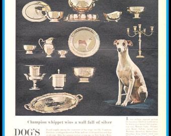 Champion Whippet, Ch. Courtenay Fleetfoot, AKA Ricky- Original 1965 magazine article