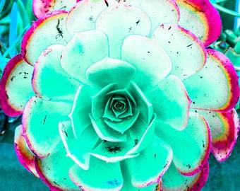 Turquoise Succulent