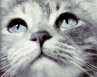 Cat artwork, Cat photography, Cat art, Cat abstract art, printable animal art, Cat wall art, bohemian decor, Cat print, animal photography