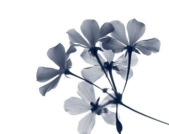 Blue and White Floral Photography - Botanical - minimalist - indigo - x-ray art - Blue and White Print