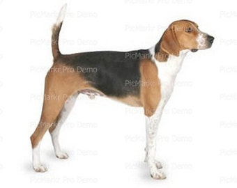 American-Foxhound - Edible Cake and Cupcake Topper For Birthday's and Parties! - D20811