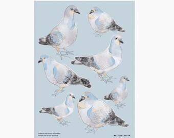 Pigeons sticker sheet