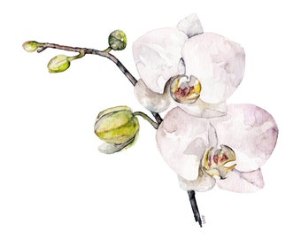 "Orchid Painting - Print from Original Watercolor Painting, ""Orchid"", Botanical, Watercolor Flowers, Flower Print"