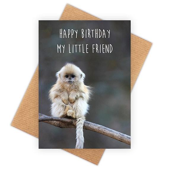 happy birthday funny monkey - photo #26