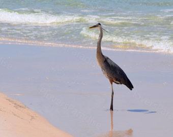 Florida Great Blue Heron Print // Beach Bird Photograph // Heron Picture
