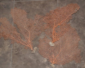 Wholesale Red Sea Fan, Dried Sea Fans, Wholesale Sea Fans for Craft, Sea Fans