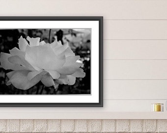 Wall Art, Botanical Art, Rose, Black and White Photography, Downloadable Art, Printable Art