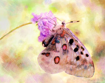 """Wall Art, Painting, """"Butterfly"""" Archival Fine Art Giclee Print"""