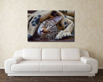 Sleeping grey tabby kitten canvas, pet photography, animal photography, Kitten on canvas