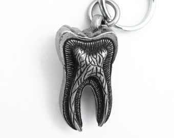 Human Tooth Keychain - Tooth Anatomy Keychain, Dentist, Dental, Teeth