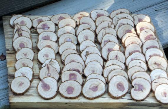 100 Cedar Tree Branch Slices 1 3 4 Diy Arts Crafts