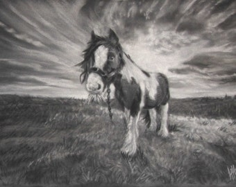 Piebald Cob - Limited Edition Mounted A3 print of a moorland Cob
