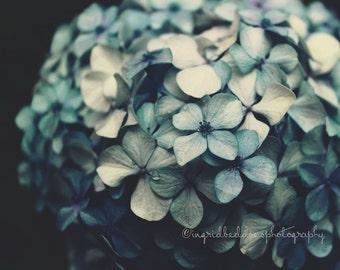 Hydrangea photography, flower print, dark blue flowers, nature photography, fine art print, moody wall decor, bedroom, home decor