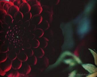 Flower print, dahlia wall art, dahlia print, dark red flower photography, floral wall art, moody, whimsical, home decor, bedroom wall decor