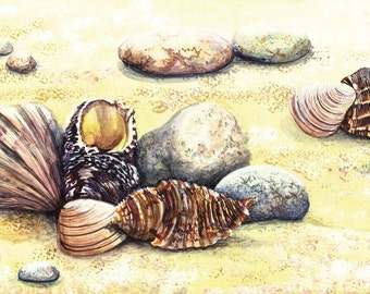 Shells Greetings Card