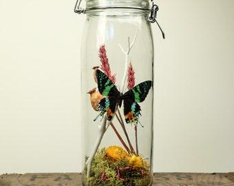 Glass Jar Terrarium Kit with Sunset Moth