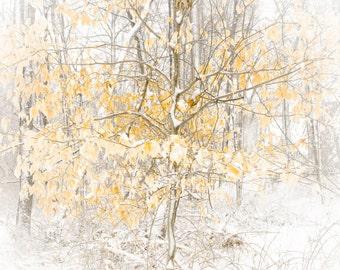 Winter Tree in Woods Pennsylvania Photography 8 x 12 digital print