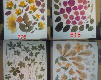 Pressed flowers / oshibana assortment - real flowers leisure arts. Pressed leaves, pressed foliage.  #776 #815 #693 #864