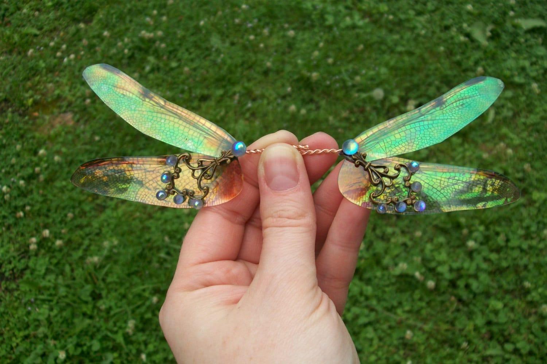 21 Pictures of Iridescent Dragonflies |Iridescent Dragonflies