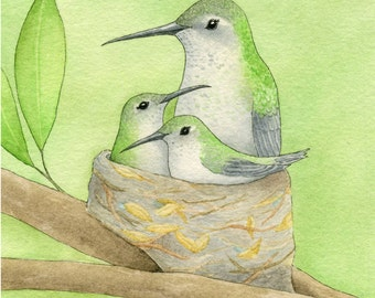 Hummingbird Mother with Babies (Treetop Trio) Matted Print