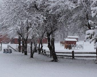 Winter Farm Scene, Winter Barn Holiday Photo Card, Christmas Card, Holiday Card, Winter Solstice Card, Original Photography, Cow Christmas