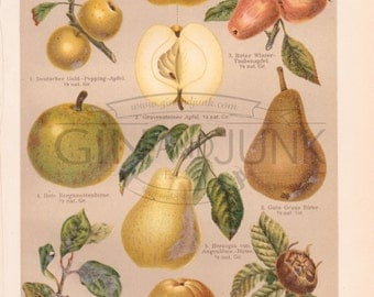 Antique Apples and Pears Print from 1890 - Fruit Lithograph, Kitchen Decor