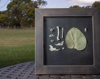 Eucalyptus leaf and bones frame