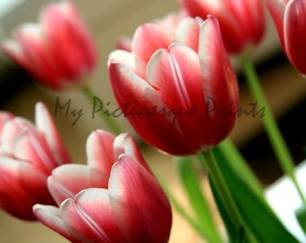 Tulips in spring, flowers for mother's day