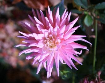 Pink Flower, Photograph, Wall Decor